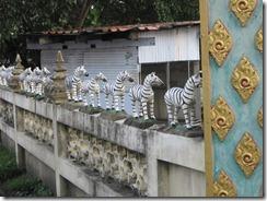 2011_10_14 Zebras