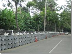 2011_10_20 Flood Preparations (6)