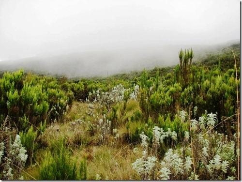 Kilimanjaro Plant Life (19)