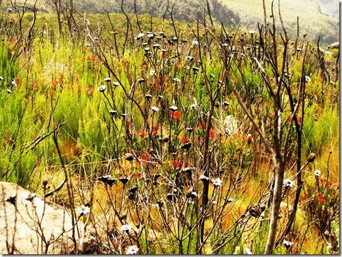 Kilimanjaro Plant Life (22)