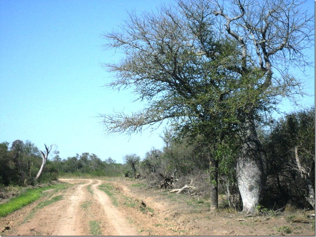 2008_08_31 Paraguay Chaco (37)