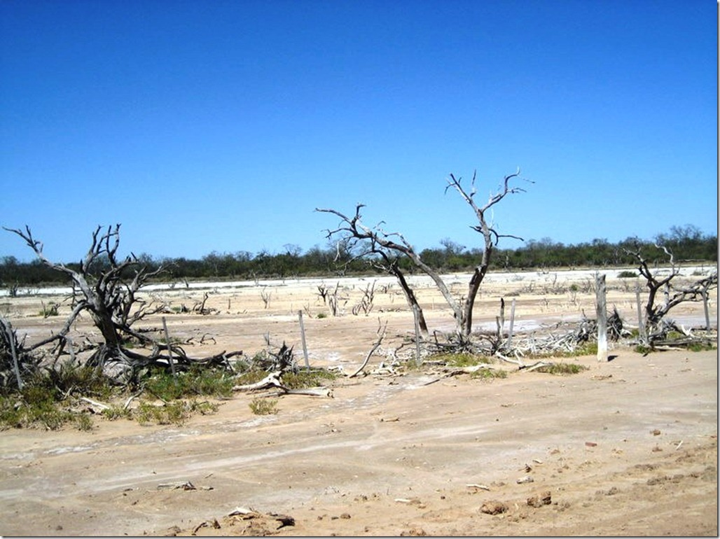 2008_08_31 Paraguay Chaco (58)