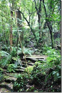 page 6 - jungle path