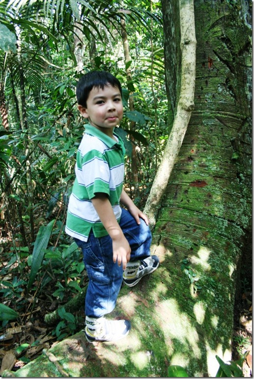 2008_07_08 Brazil Amazon Nature Walk (11)