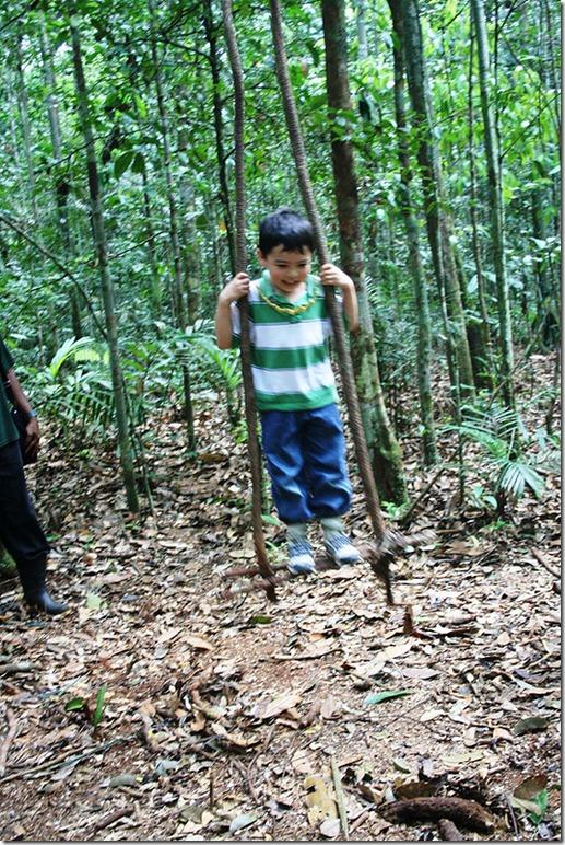 2008_07_08 Brazil Amazon Nature Walk (15)