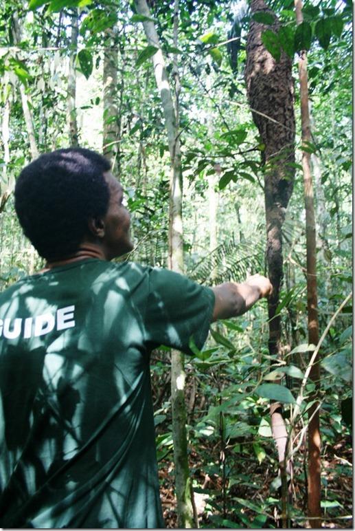 2008_07_08 Brazil Amazon Nature Walk (2)