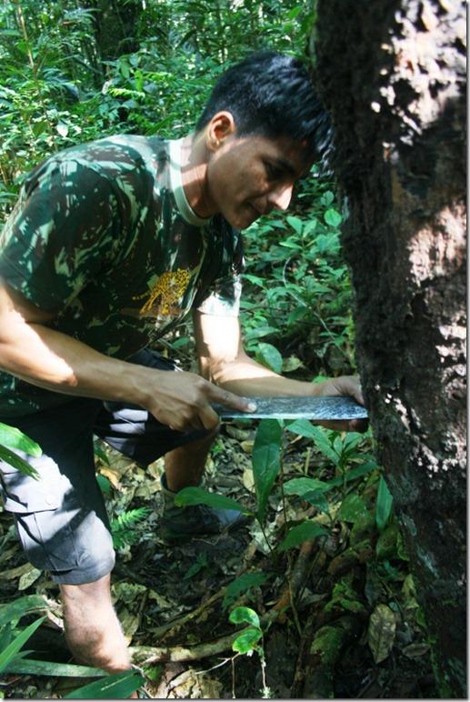 2008_07_08 Brazil Amazon Nature Walk (3)