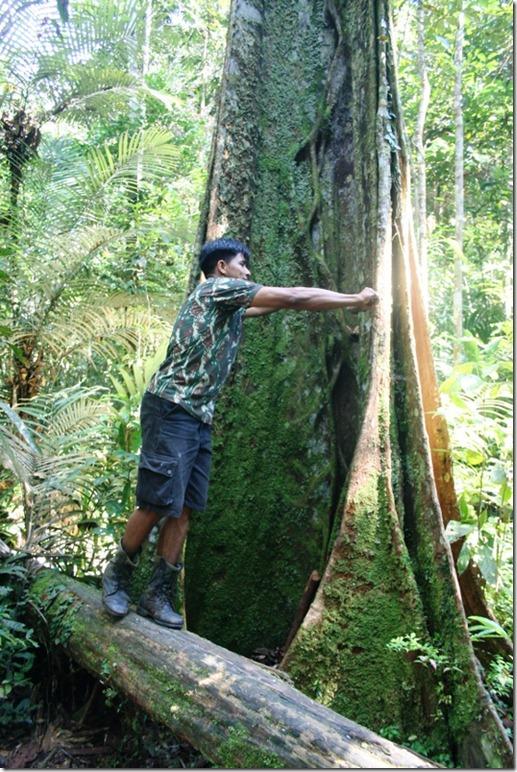 2008_07_08 Brazil Amazon Nature Walk (4)