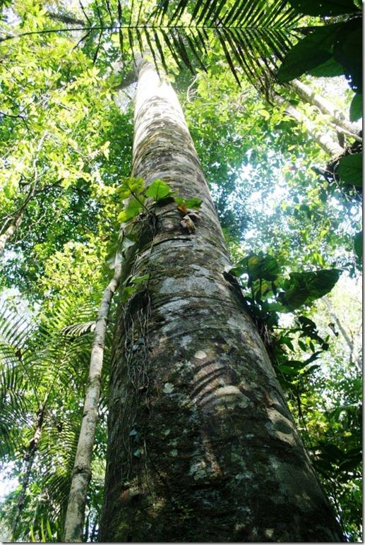 2008_07_08 Brazil Amazon Nature Walk (8)