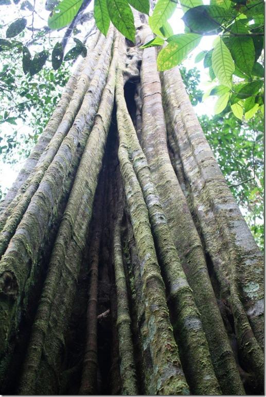 2008_07_08 Brazil Amazon Nature Walk