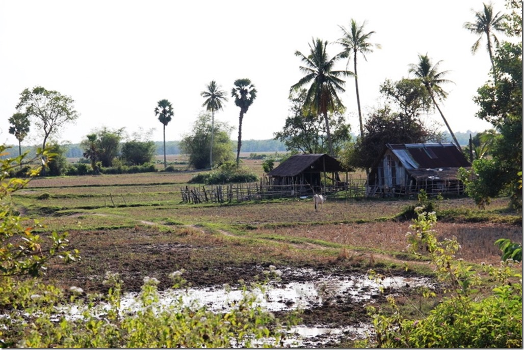 2012_12_31 Cambodia Wilderness (11)