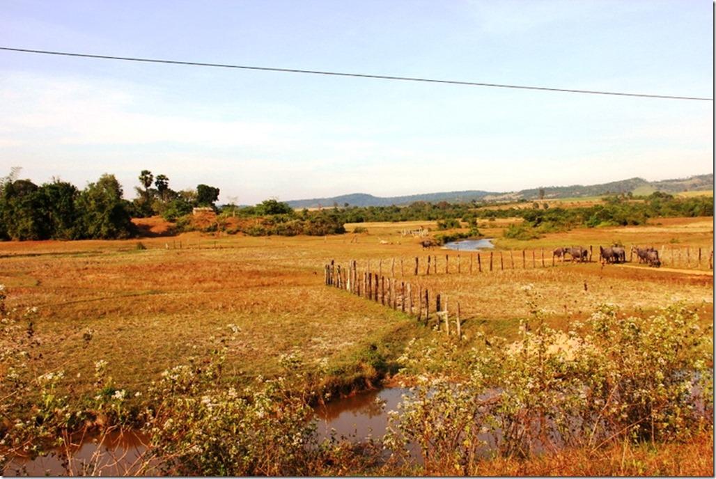 2012_12_31 Cambodia Wilderness (12)