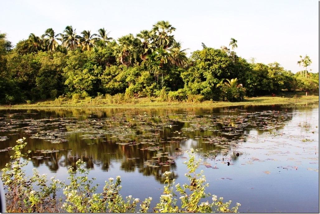 2012_12_31 Cambodia Wilderness (13)