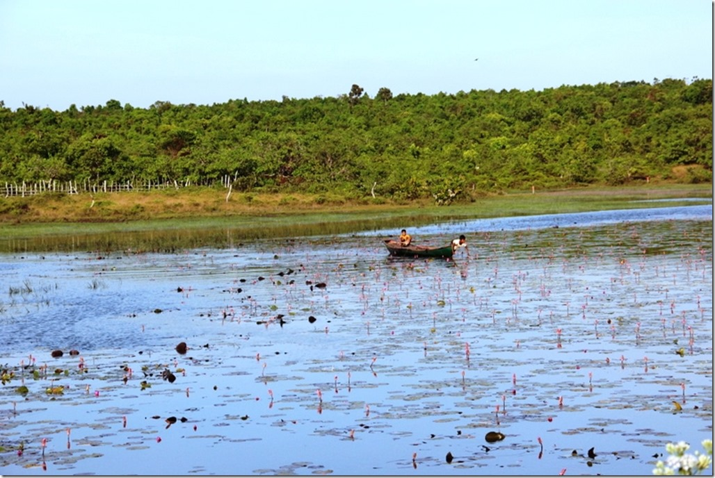 2012_12_31 Cambodia Wilderness (14)
