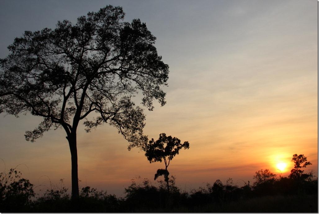 2012_12_31 Cambodia Wilderness (29)