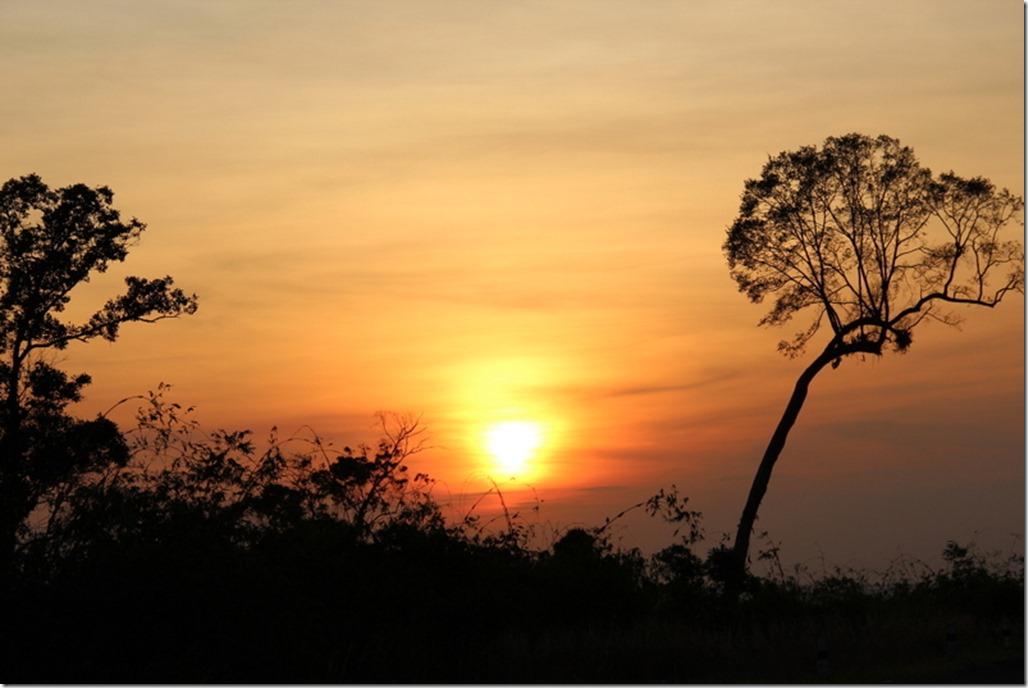 2012_12_31 Cambodia Wilderness (30)