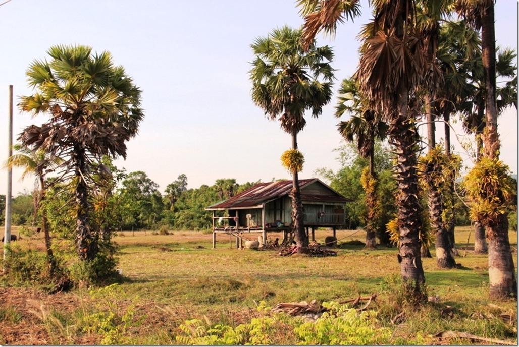 2012_12_31 Cambodia Wilderness (8)