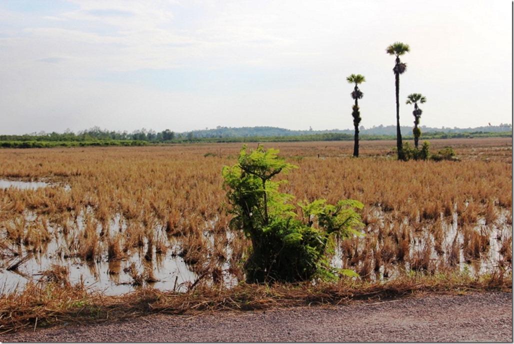 2012_12_31 Cambodia Wilderness (9)