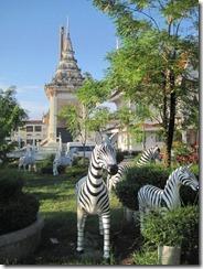 2011_10_14 Zebras (4)