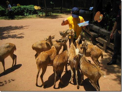 2012_05_26 Chokchai Farm (21)