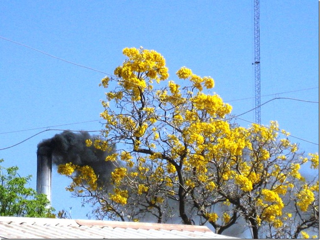 2008_08_31 Paraguay Filadelfia (23)