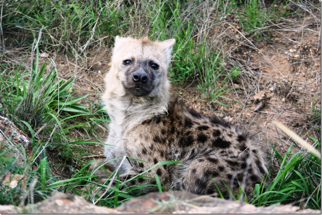 2009_11_23 South Africa Kruger (3)