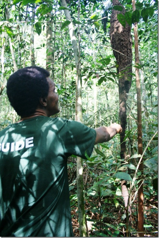 2008_07_08 Brazil Amazon Nature Walk (2)