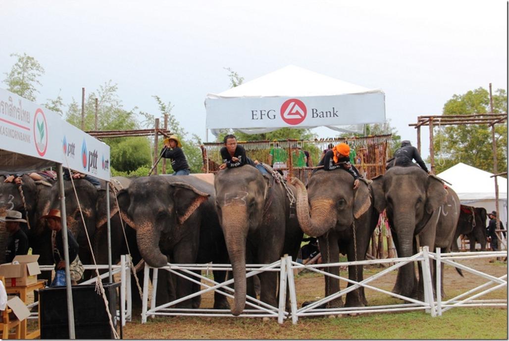 2012_09_06 Thailand Hua Hin Elephant Polo (9)