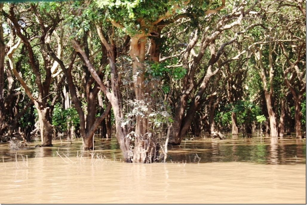 2012_12_28 Cambodia Tonle Sap Mangrove Forest