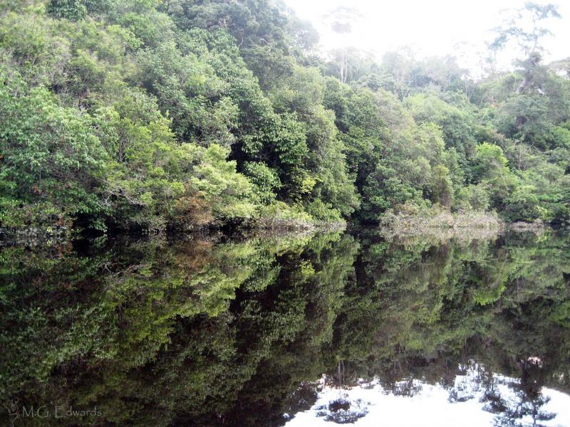 2008_07_17 Brazil Amazon River