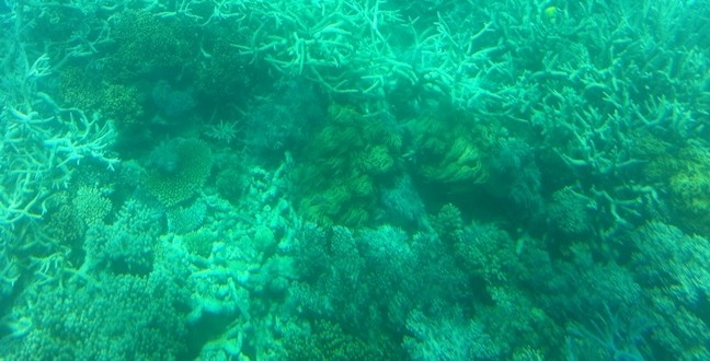 Great Barrier Reef, Australia (Video)