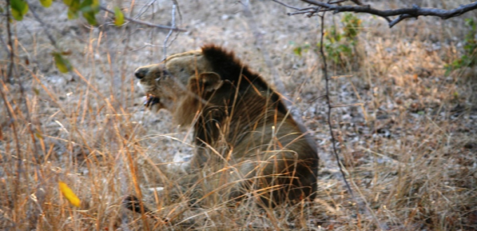 When I Saw a Lion